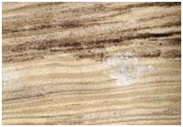 Informatii importante privind materialul lemnos a produselor achizitionate de la noi